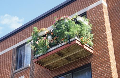 Mon jardin espace pour la vie blogue espace pour la vie for Balcon in english