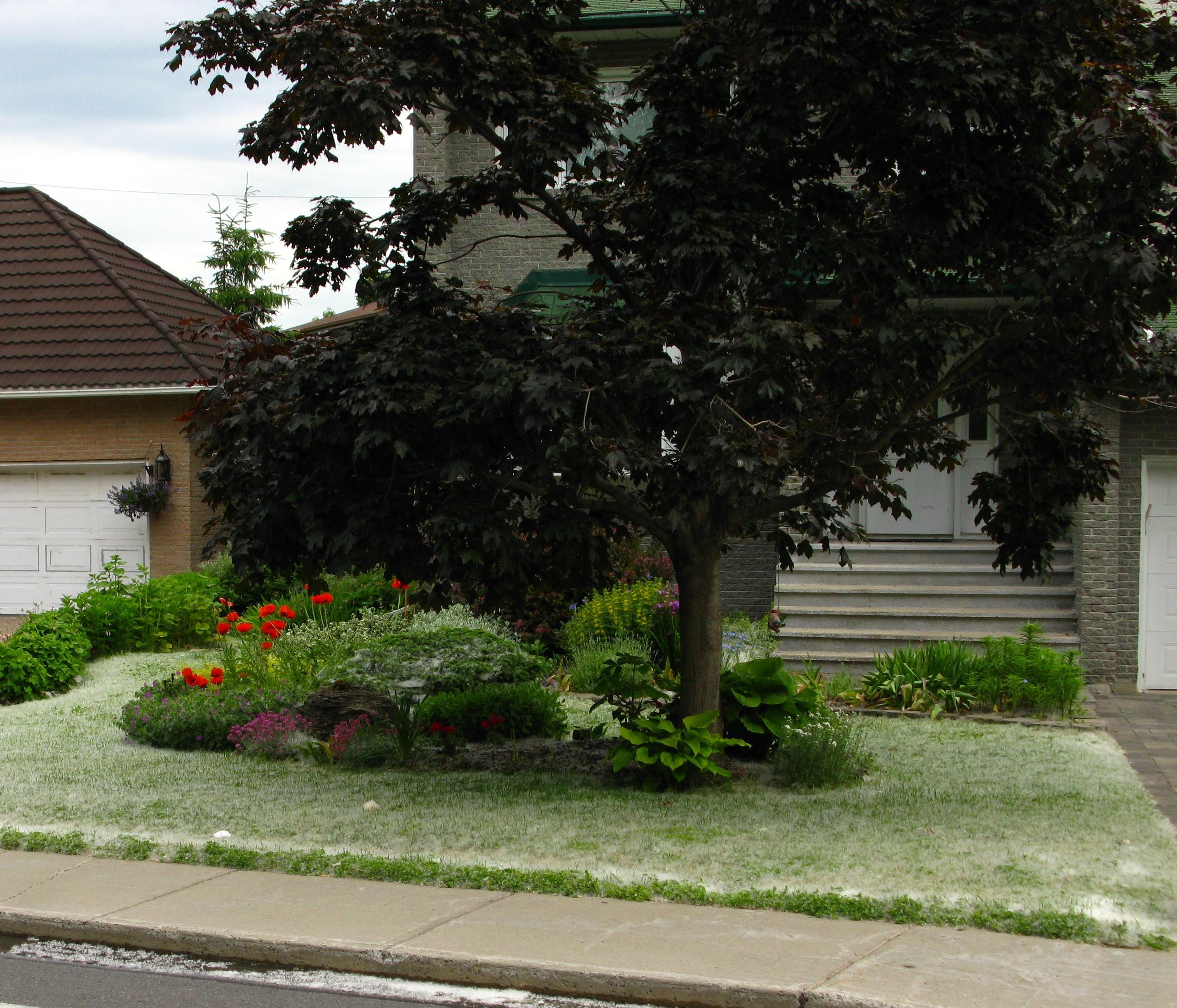 De la neige en juin du pollen qui tombe des arbres for Planificateur jardin