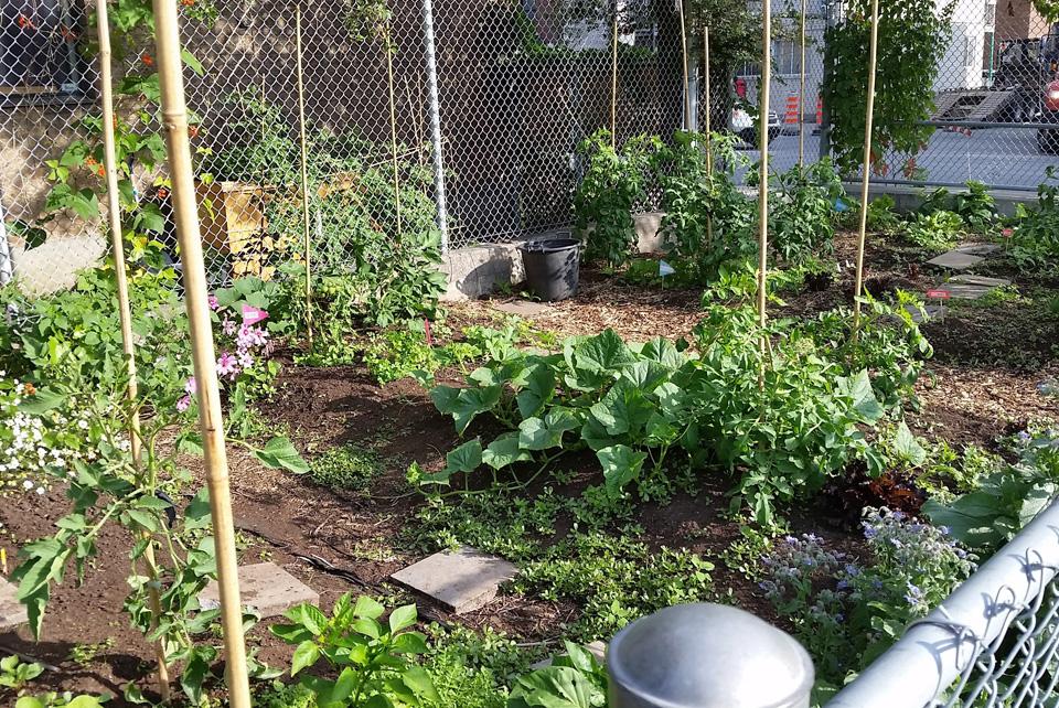 Nouvelle tendance au jardin blogue espace pour la vie for Planificateur jardin