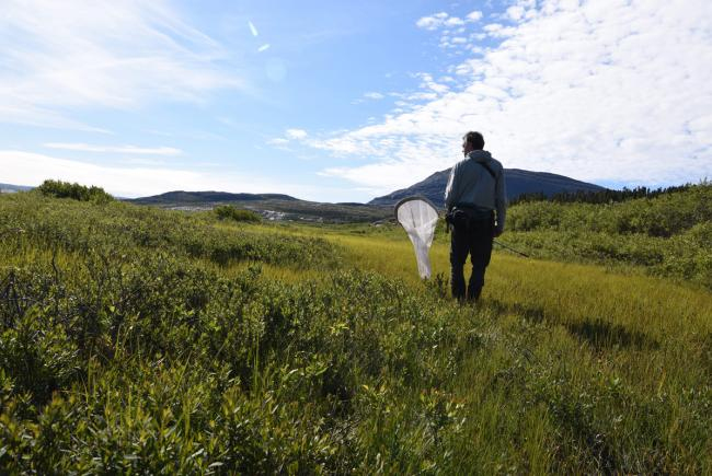 Butterfly inventory in Tursujuq National Park, Tasiujaq sector