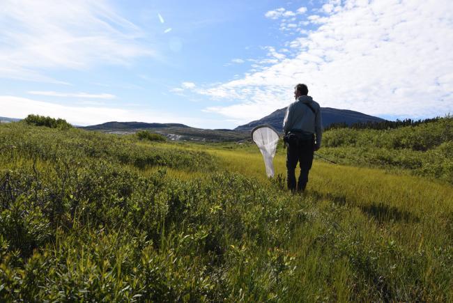 Inventaire de papillons dans le parc national Tursujuq, secteur Tasiujaq