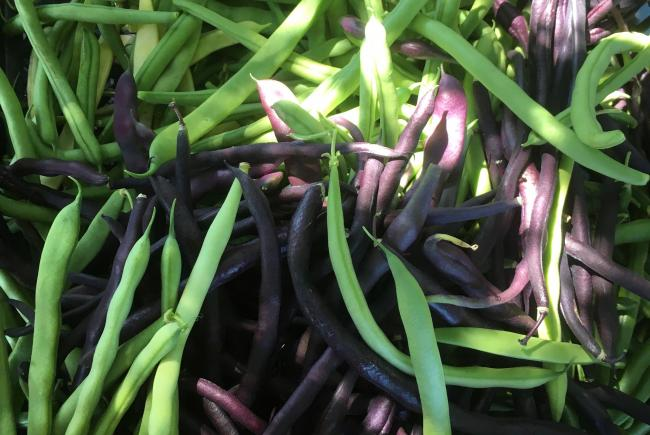 Green beans offer abundant harvests