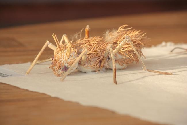 Parmi ses expériences éducatives, l'équipe de conception a façonné des insectes à base de matériel végétal.