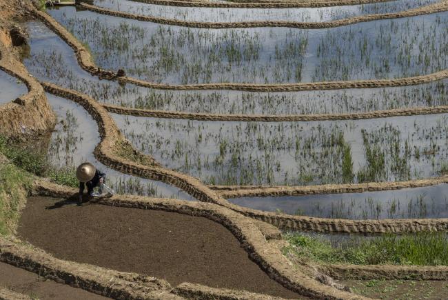 Terraced rice fields (Yuanyang)