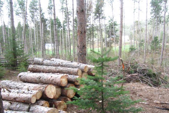 Billots de bois