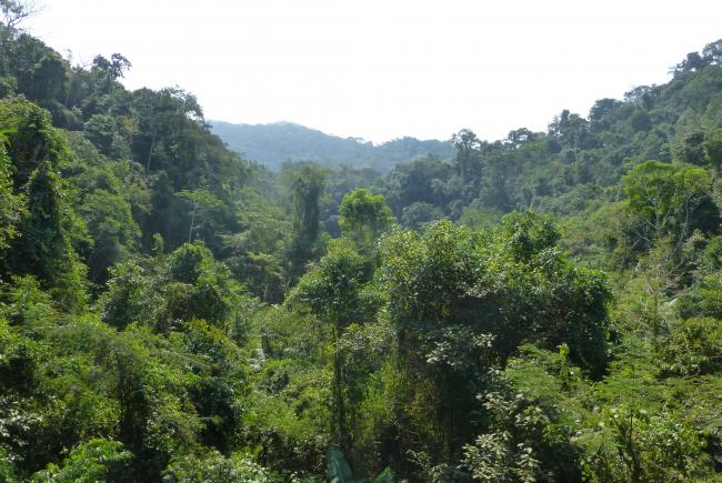 The Atlantic Rainforest in the União Biological Reserve shelters an important population of golden lion tamarins.