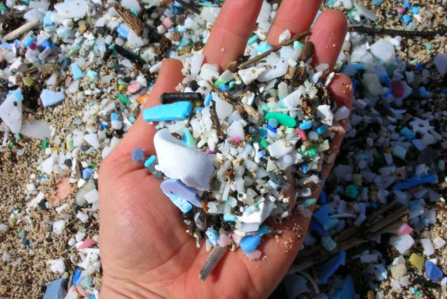 Microplastics at the beach (The 5 Gyres Institute)