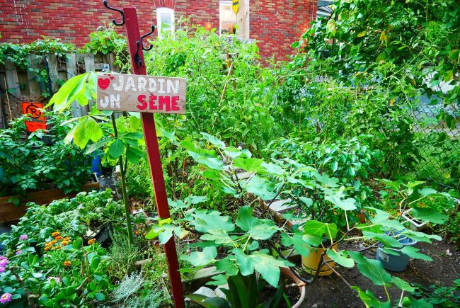 Diversifier vos semences, c'est augmenter votre résilience.