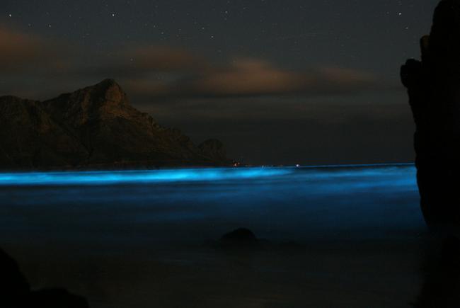blue-tide-dinoflagellates-cc-flickr-bmc-ecology-8591666741_2063781357_o.jpg