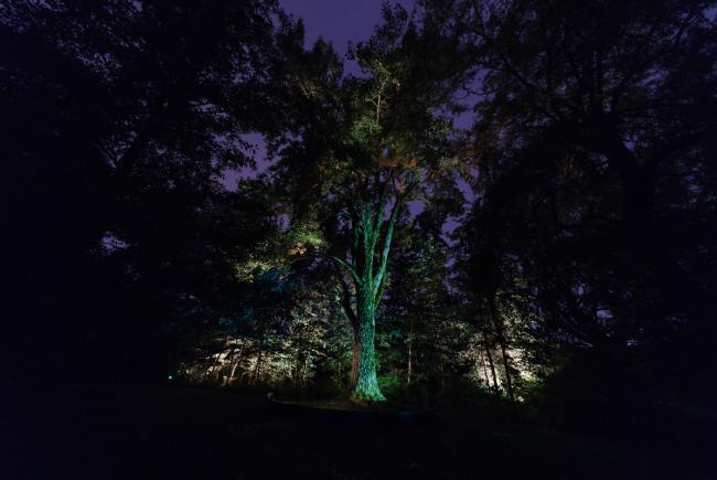 Spirit of Place, an artistic illumination of the First Nations Garden
