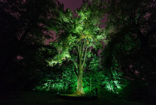 L'Esprit des lieux, mise en lumière artistique du Jardin des Premières-Nations