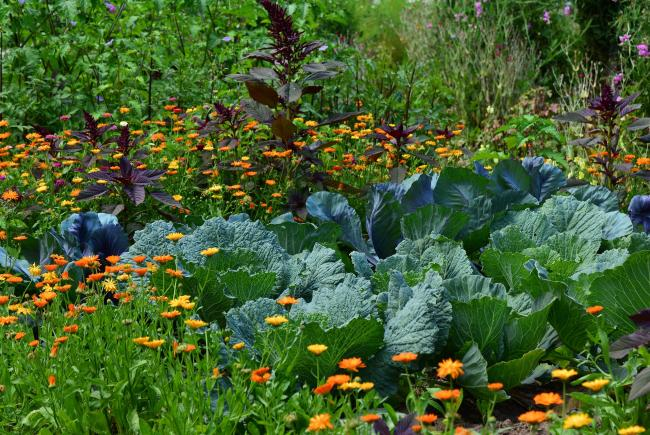 Tips and advice for a productive vegetable garden