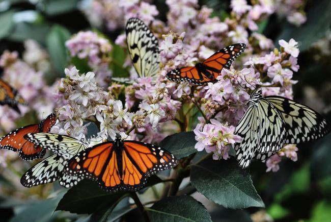 Diversity ofbutterflies
