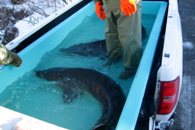 Espace pour la vie accueille des poissons d avril for Bac a poisson 2000l