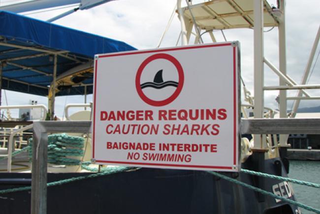 Panneau - Danger requins © Espace pour la vie (Marie-Odile Noël)
