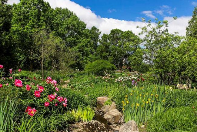 Ruisseau fleuri au Jardin botanique © Espace pour la vie (Claude Lafond)