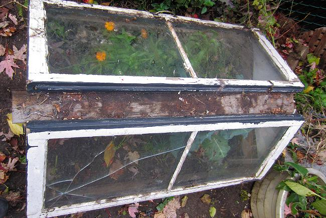 A chassis-type cold frame made of recycled windows set at a roughly 30° degree angle to let a maximum of light through.