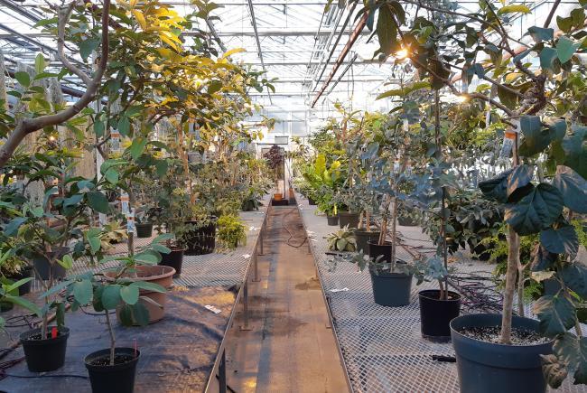 Insectarium Breeding Greenhouses.