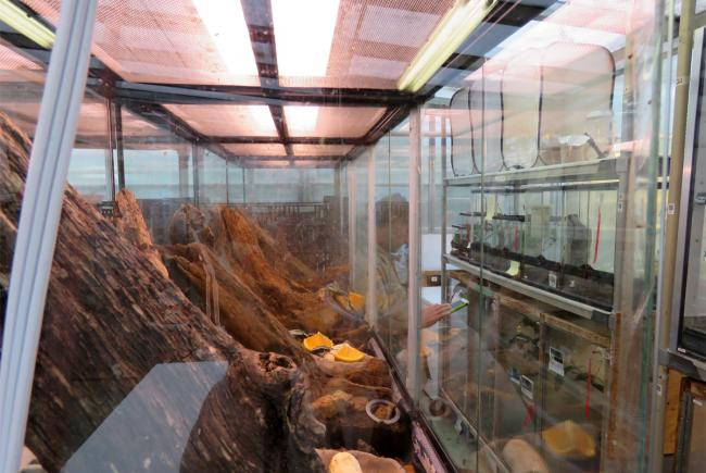 Backstage at the Insectarium: not your average spot!