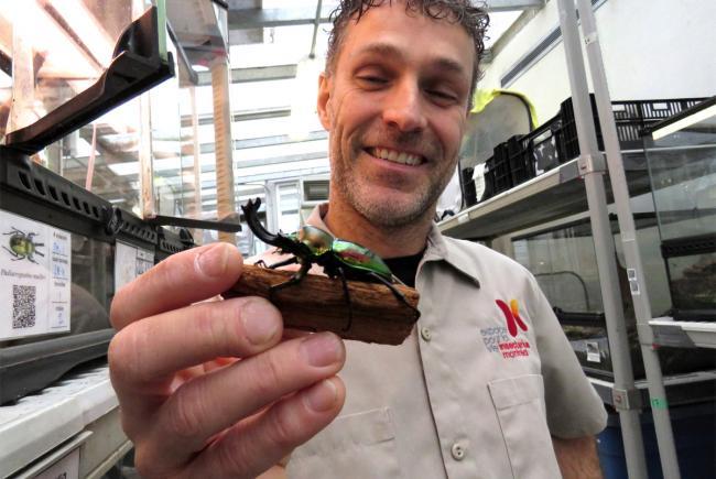 Les coulisses de l'Insectarium : un endroit hors du commun!