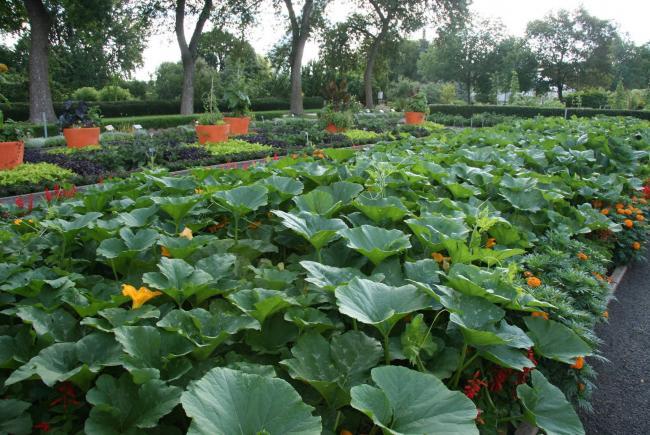 Grow automn vegetables