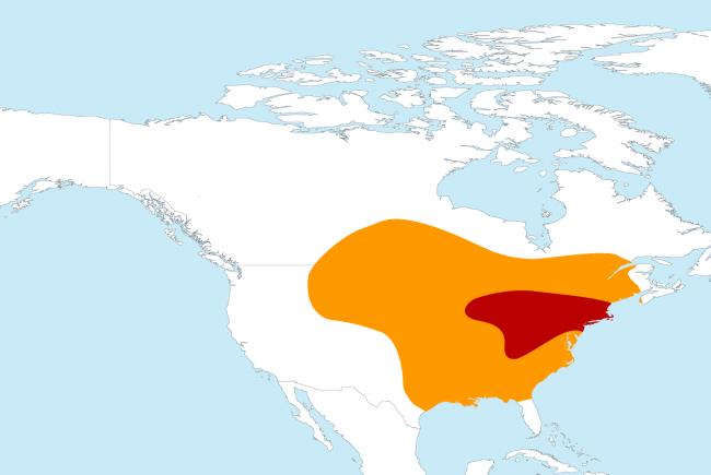 In red: the breeding area; in orange, the wintering area.