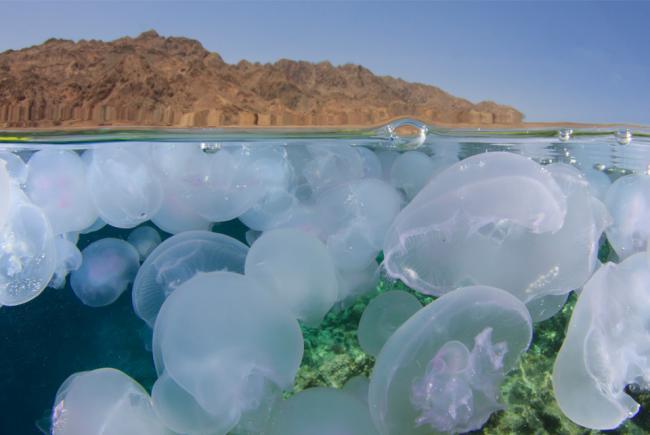 Méduses et désert