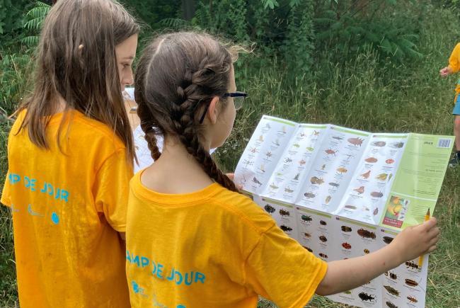 Des apprentis scientifiques tentant d'identifier des insectes.