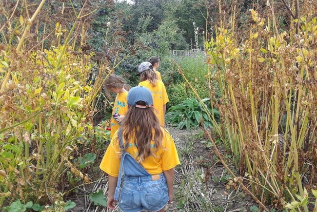 Des apprentis scientifiques dans le jardin de vivaces aux Jardins-jeunes.
