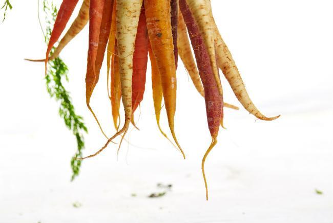 Carrots, heritage varieties