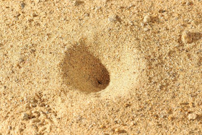 The antlion larva's trap