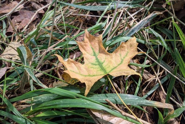 Les feuilles des arbres tombent au sol à l'automne même au Biodôme.