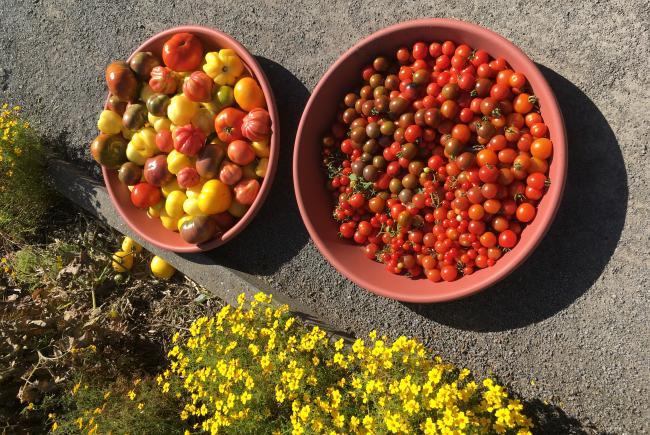 Harvest to boost production
