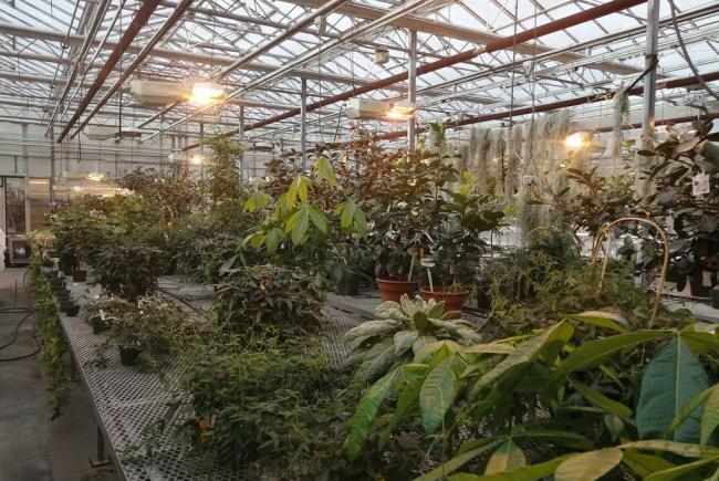 Serres pour nos plantes