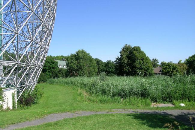 Marais filtrant de la Biosphère