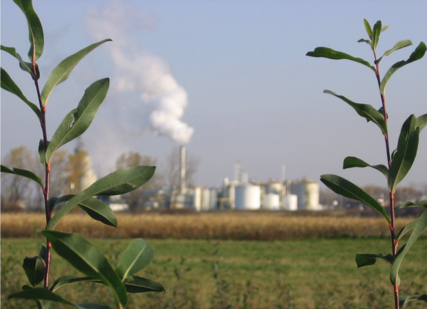 Planting willows for energy use, with operating plant in background.