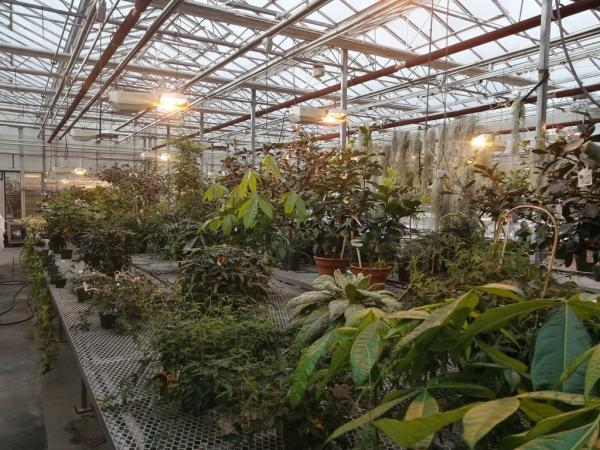 Greenhouses for our plants