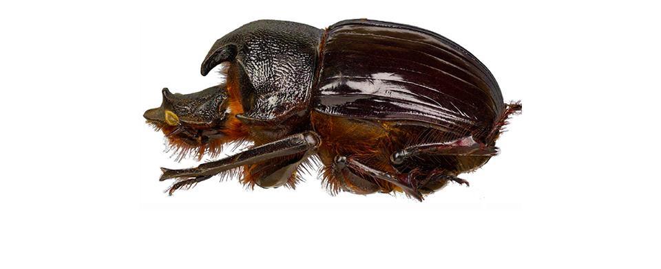L'histoire d'un insecte nommé en l'honneur de Stéphane Le Tirant