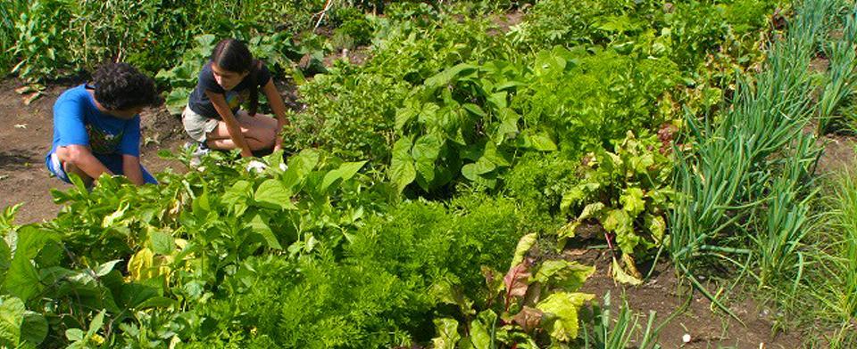 Faire découvrir le jardinage à son enfant - Carrousel