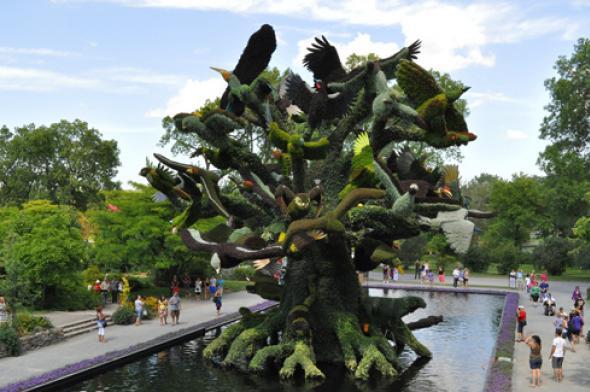 L'arbre aux oiseaux © cc Flickr (robertlafond2009)