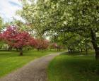 Créer son propre petit arboretum - carrousel