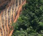 Déforestation pour la plantation du palmier à l'huile.