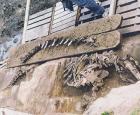 Excavation des ossements du béluga à Saint-Félix-de-Valois © Société de Paléontologie du Québec