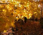 Couleurs d'automne © Jardin botanique de Montréal (Michel Tremblay)