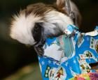 Christmas for the animals at the Biodôme
