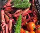 Okra, margose et Solanum aehiopicum 'Turkish Orange' aubergine africaine