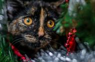 carrousel-noodle-in-the-christmas-tree-cc-flickr-mssarakelly-11485298886.jpg