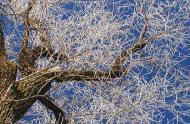 Carrousel - Un arbre en hiver