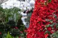 Sapin de Noël dans la Grande Serre © Espace pour la vie