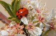 Coccinelle © GillesMurray